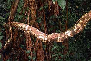 ayahuasca12.jpg